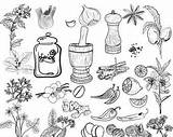 Clipart Spices Herbs Kitchen Doodle Coloring Herb Lemon Pages Jar Parsley Etsy Il Name sketch template