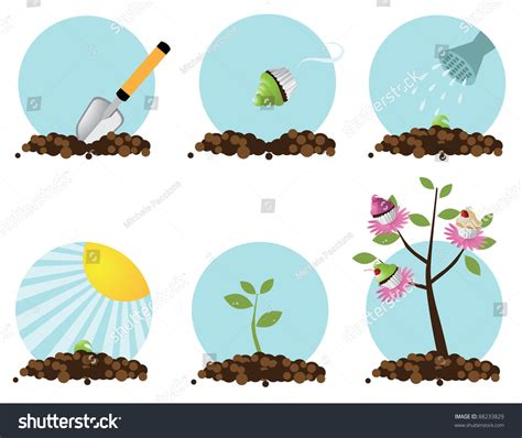 how to grow a cupcake tree step by step eps 8 vector