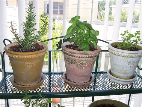 Herb Garden Indoor : How To Grow Herbs Indoors
