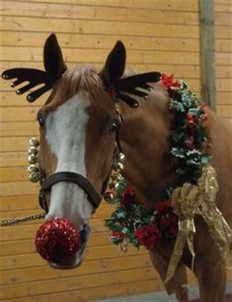 christmas decorating with horses 1000 images about property on equestrian horses and