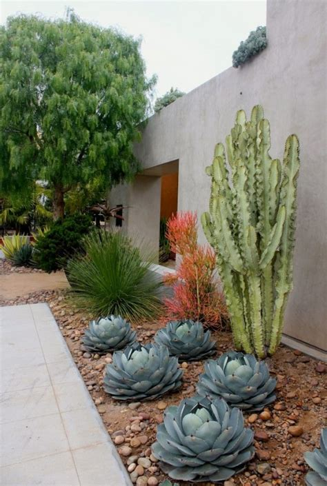 landscaping with cactus how to use cacti in outdoor decor outdoortheme com