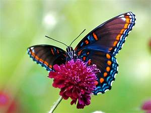 Illustrations Of Butterflies | HD Colorful Butterfly ...