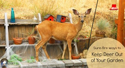 how to keep deer out of vegetable garden how to keep deer out of your garden add hair to your