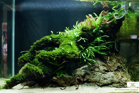 Moose Im Aquarium Und Terrarium