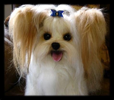 mi ki dog images  pinterest  dogs