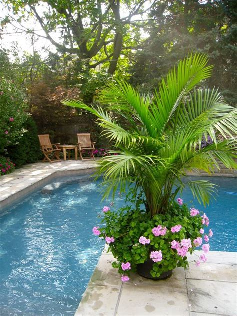25 beautiful pool plants ideas on pool