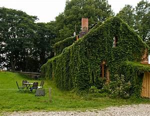 Immergrüne Kletterpflanze Für Zaun : kletterpflanze wilder wein als selbstkletternde pflanze ~ Michelbontemps.com Haus und Dekorationen