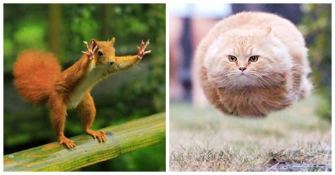 Animal Funny Animal Pictures Perfectly Timed Photos