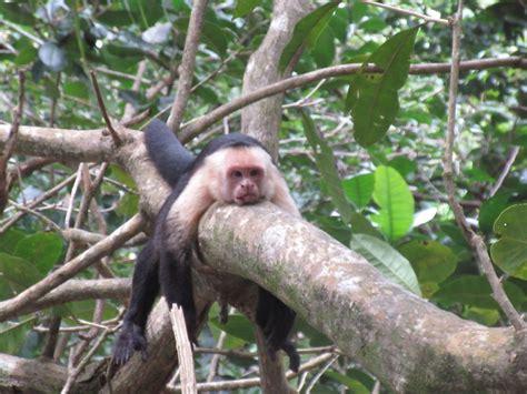 Crazy Animals Saw South America Part Bored Panda