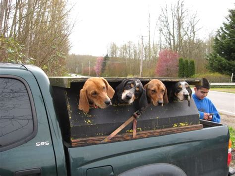 dog hunting truck 17 best images about coon dogs hunting on pinterest coon
