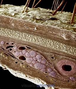 Cross Section And Crosses On Pinterest