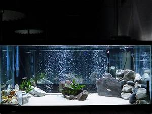 75 gallon aquarium design - 75 gallon Tanganyikan cichlid