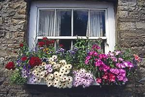 Blumenkästen Bepflanzen Sonnig : blumenkasten gestalten sch ne ideen f r den balkonkasten ~ Frokenaadalensverden.com Haus und Dekorationen