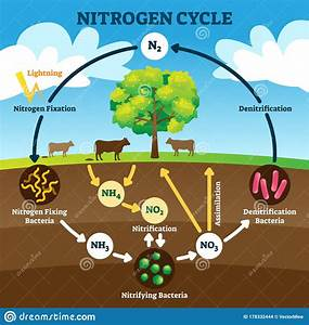 Nitrogen Cycle Vector Illustration  Labeled N2