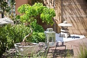 Asiatische Gärten Gestalten : terrassengestaltung ideen zum nachmachen mein sch ner garten ~ Sanjose-hotels-ca.com Haus und Dekorationen