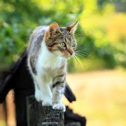 Katzen Aus Garten Vertreiben : katzenkot im garten unterbinden mein sch ner garten ~ Frokenaadalensverden.com Haus und Dekorationen