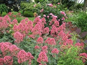 Plantes Vivaces Pour Massif : roses du jardin ch neland cr ation d 39 un massif de plantes ~ Premium-room.com Idées de Décoration
