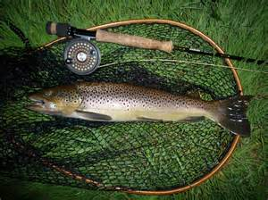 Fly Fishing Trout Fish