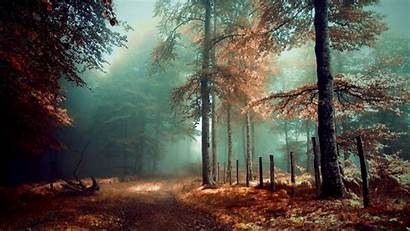 Mystical Forest Wallpapers Desktop Landscape Mystic Dark