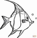 Coloring Angelfish Pages Printable Fish Angel Drawing Tropical Supercoloring Adults sketch template
