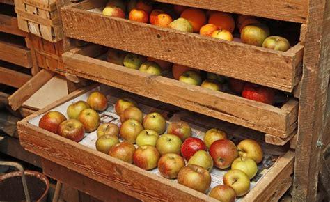 Aepfel Richtig Ernten Und Wie Lagern by 196 Pfel Richtig Ernten Und Lagern Gartentipps Apfelbaum