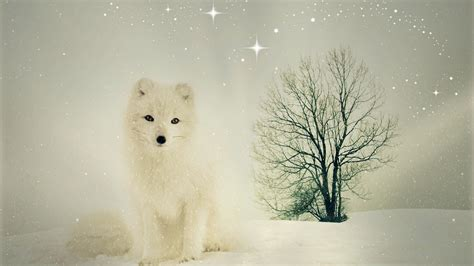 wallpaper arctic fox fuchs snow winter hd animals