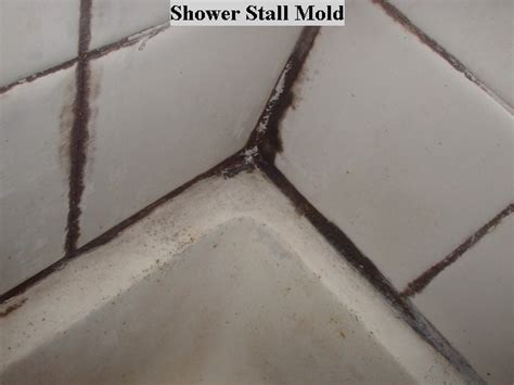 Kill Black Mold In Shower by Tile Fast Tips Tricks For Home Owners How To Not Die