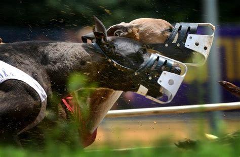 greyhound racing tracks dog casinos abandon gamblers days greyhounds wheeling washington island virginia west race racetrack states dailyherald business
