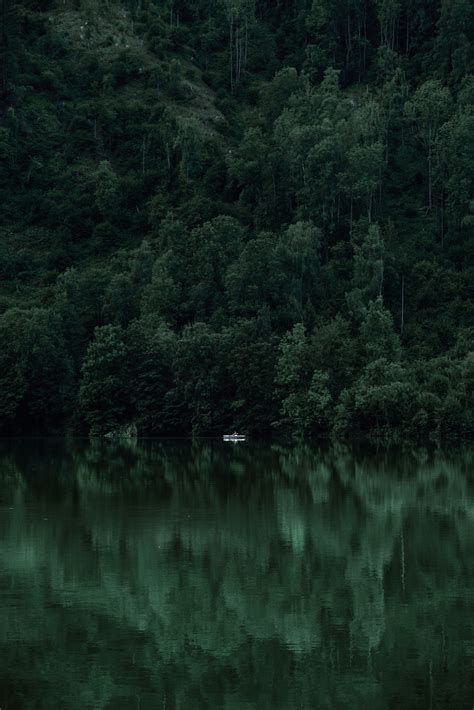 nature green aesthetic wallpapers