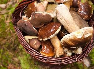 Comment Cultiver Des Champignons : 9 champignons comestibles cueillir sans crainte d tente jardin ~ Melissatoandfro.com Idées de Décoration