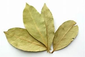 Portugiesischer Lorbeer Gelbe Blätter : echter lorbeer braune bl tter ostseesuche com ~ Eleganceandgraceweddings.com Haus und Dekorationen