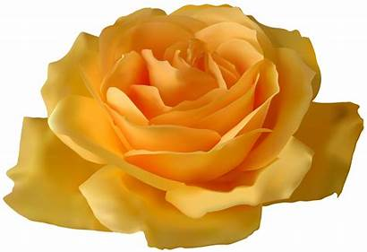 Yellow Rose Clipart Link