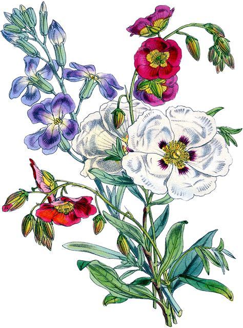 graphics clipart gorgeous vintage floral bouquet image the graphics