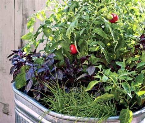 legumes en pot sur balcon faire un potager sur le balcon quelques id 233 es cr 233 atives