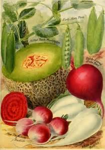 Vegetable Seed Catalog