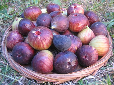 types of figs delicious discoveries 187 blog archive 187 fig love