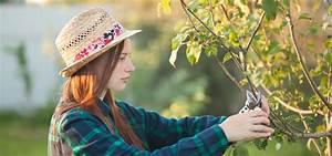 Mein Apfelbaum Anleitung : apfelbaum schneiden apfelb ume richtig schneiden apfelb ~ Lizthompson.info Haus und Dekorationen