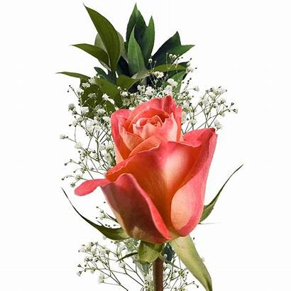 Single Roses Bouquet Rose Globalrose Fundraisers Bouquets