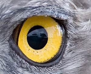 la perception en couleurs des animaux With charming couleurs chaudes couleurs froides 3 loeil et la vue