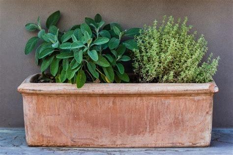 grow  food  window boxes   grow tips