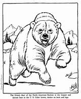 Grizzly Bear Coloring Pages Bears Animal Animals sketch template