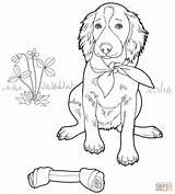 Coloring Setter Irish Pages English Printable Supercoloring Dog Puppy Colouring Bulldog Welsh Ipad Malowanki Sheets Pies Labrador Shih Credit Larger sketch template