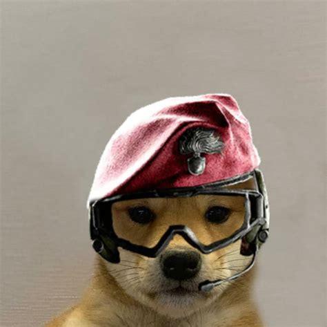 Alibi Doge Dogwifhatgang