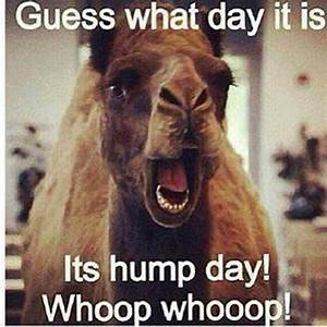 Hump day funny quote   Words   Pinterest