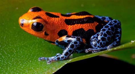 amazon rainforest animals list conservation pictures