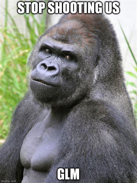 Gorilla Meme - hot gorilla imgflip