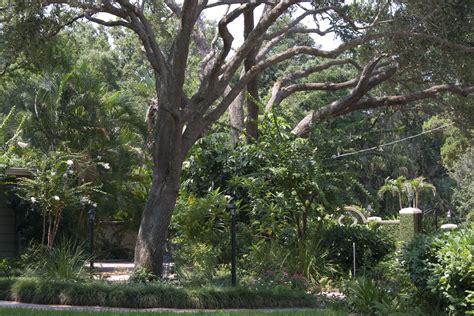 quality tree service of sarasota trimming oak trees in sarasota florida quality tree service