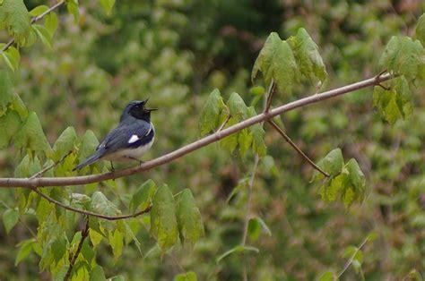 nasa lasers help researchers predict birds preferred