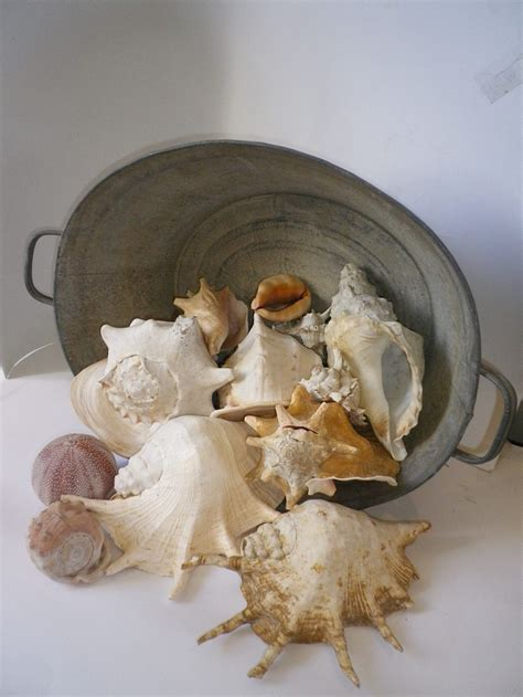 decorating seashells how to decorate with seashells 37 inspiring ideas digsdigs