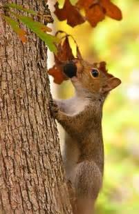Autumn Squirrel Gathering Nuts